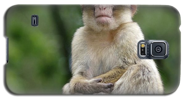 Barbary Macaque Galaxy S5 Case by Nigel Downer