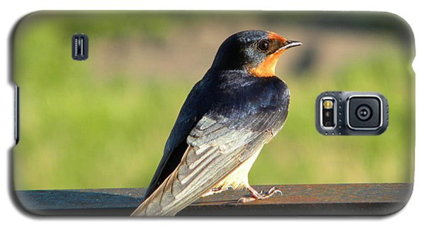 Barn Swallow Galaxy S5 Case by James Petersen