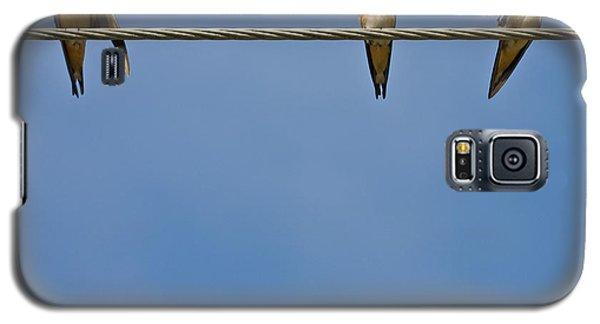Barn Swallows Galaxy S5 Case by Melinda Fawver