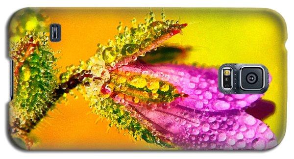 Beautiful Flower Galaxy S5 Case by Odon Czintos