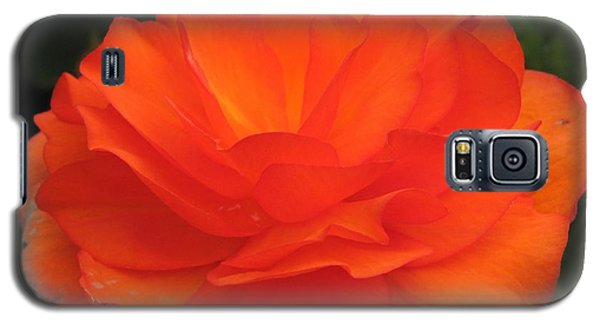 Galaxy S5 Case featuring the photograph Begonia Named Nonstop Apricot by J McCombie