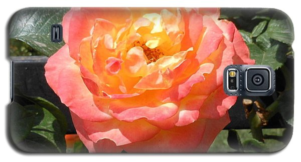 Galaxy S5 Case featuring the photograph Beijing Rose  by Kay Gilley
