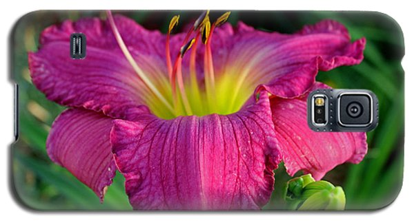 Galaxy S5 Case featuring the photograph Bela Lugosi Daylily by Suzanne Stout