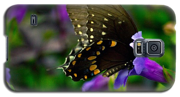 Black Swallowtail Galaxy S5 Case by Angela DeFrias