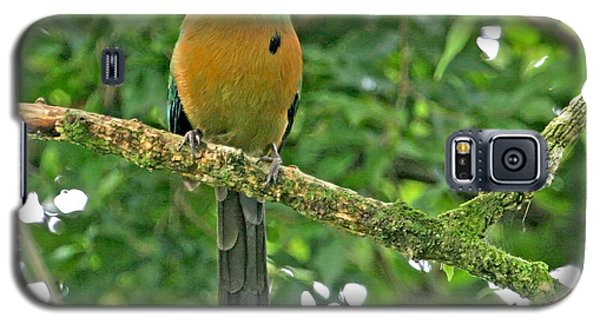 Galaxy S5 Case featuring the photograph Blue-crowned Motmot by Peggy Collins