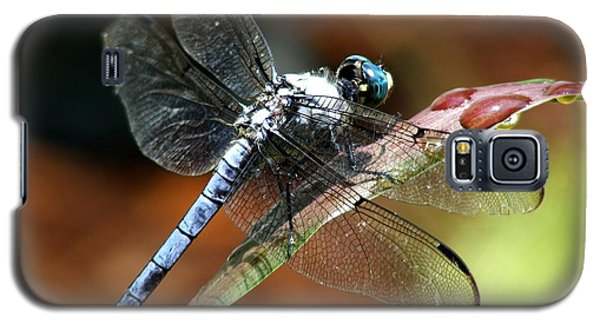 Galaxy S5 Case featuring the photograph Blue Dragonfly by Kelly Nowak