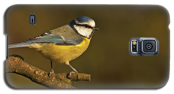 Galaxy S5 Case featuring the photograph Blue Tit  by Paul Scoullar
