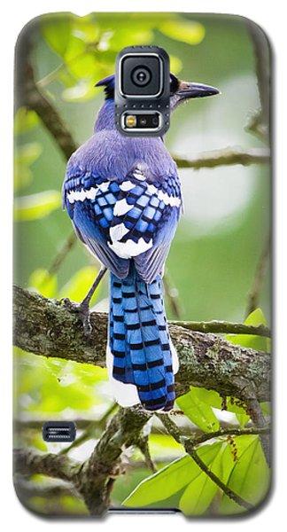 Bluejay Galaxy S5 Case by Ricky L Jones