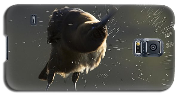 Boat Tailed Grackle Galaxy S5 Case