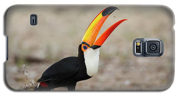 Toucan Galaxy S5 Case - Brazil, Mato Grosso, The Pantanal, Toco by Ellen Goff