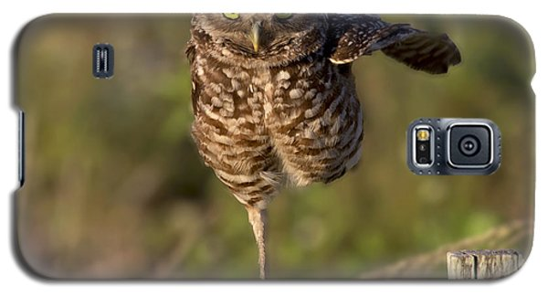 Burrowing Owl Photograph Galaxy S5 Case