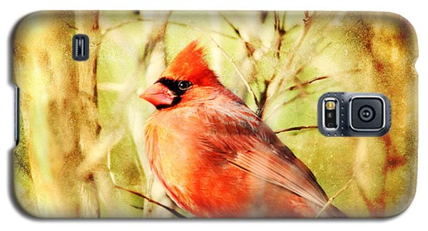 Galaxy S5 Case featuring the photograph Cardinal by Trina  Ansel
