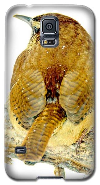 Carolina Wren In Winter Galaxy S5 Case by A Gurmankin