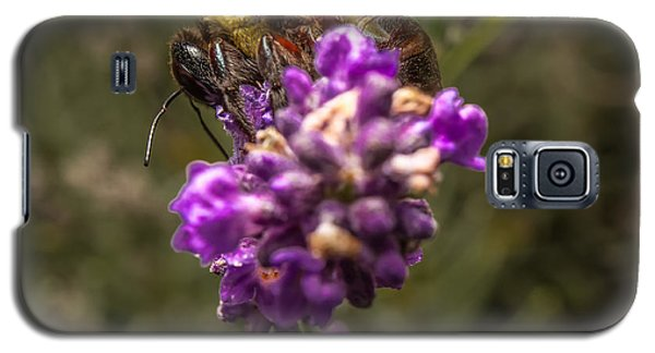Carpenter Bee On A Lavender Spike Galaxy S5 Case