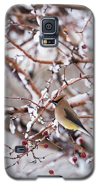 Cedar Waxwing Galaxy S5 Case