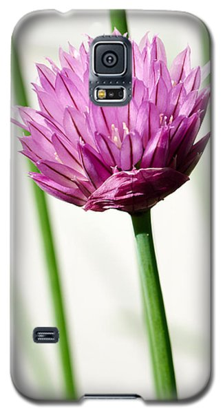 Chives Galaxy S5 Case