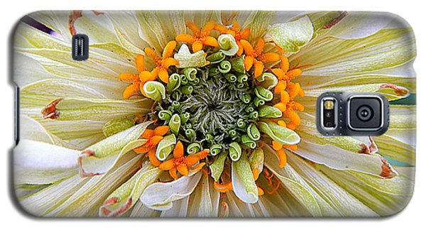 Chrysanthemum Fall In New Orleans Louisiana Galaxy S5 Case by Michael Hoard