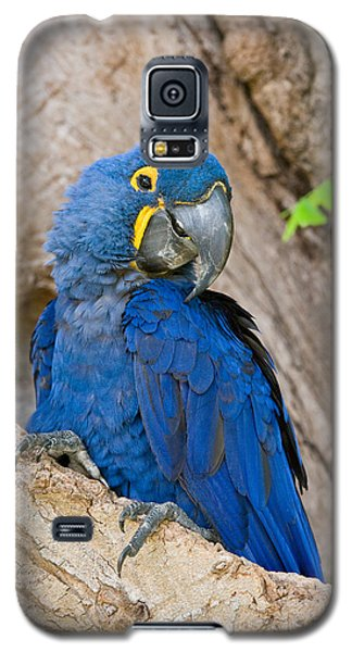 Macaw Galaxy S5 Case - Close-up Of A Hyacinth Macaw by Panoramic Images