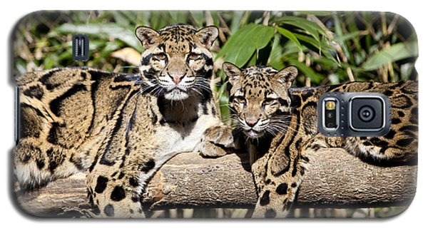 Clouded Leopards Galaxy S5 Case