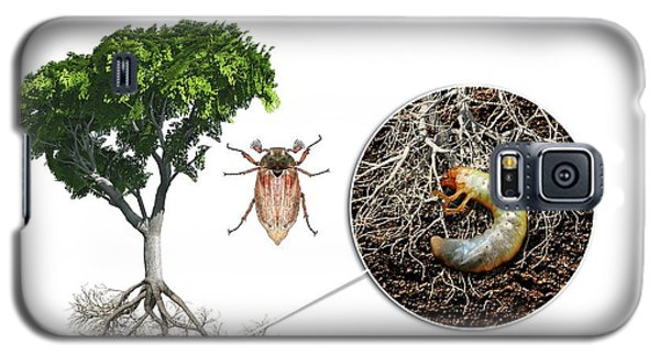 Cockchafer And Beech Tree Galaxy S5 Case