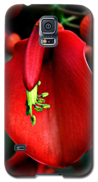 Galaxy S5 Case featuring the photograph Cockspur Coral Tree by William Tanneberger