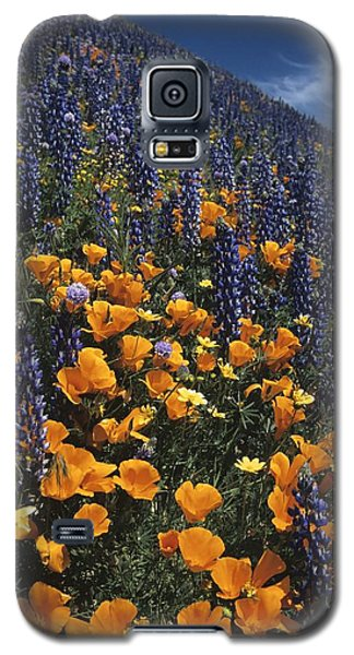 Colossal California Wildflowers Galaxy S5 Case