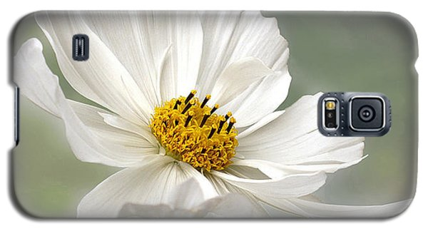 Cosmos Flower In White Galaxy S5 Case