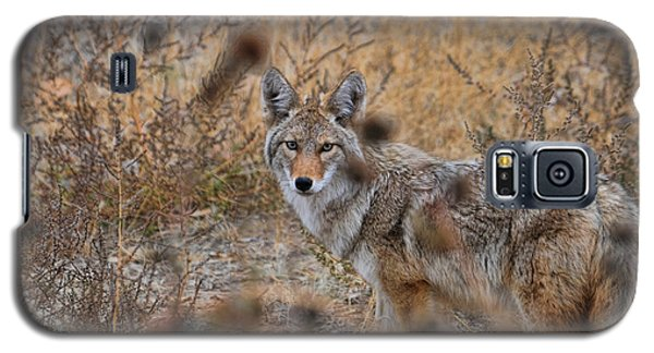 Coyote Eyes Galaxy S5 Case