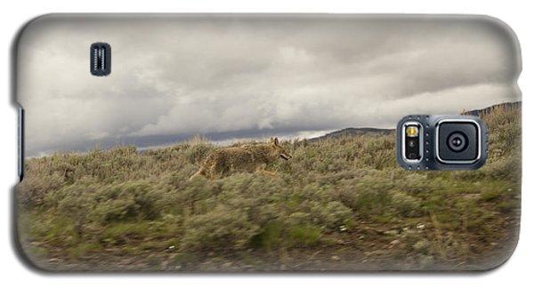 Coyote Galaxy S5 Case