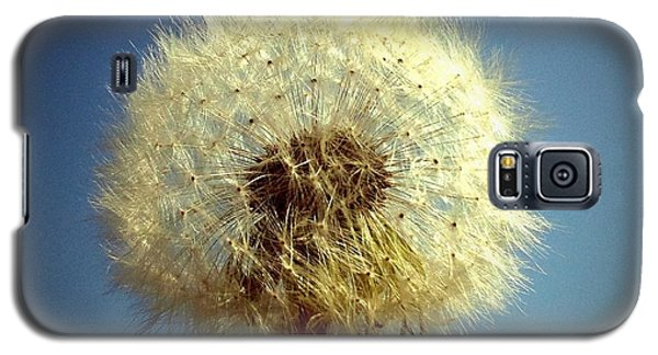 Sunny Galaxy S5 Case - Dandelion And Blue Sky by Matthias Hauser