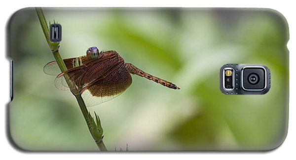 Galaxy S5 Case featuring the photograph Dragonfly by Zoe Ferrie