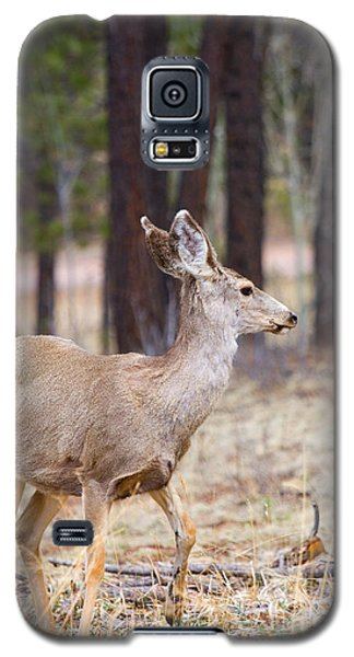 Easter Does Galaxy S5 Case