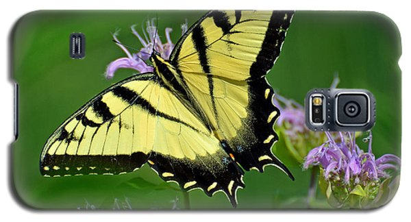 Galaxy S5 Case featuring the photograph Eastern Tiger Swallowtail by Rodney Campbell