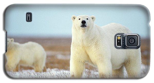 Polar Bear Galaxy S5 Case - Female Polar Bear With Spring Cub by Steven J. Kazlowski / GHG