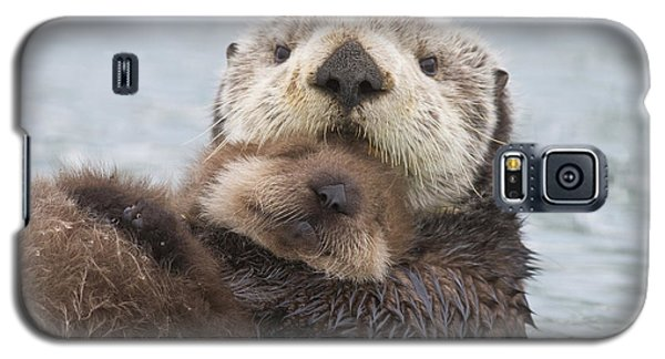 Otter Galaxy S5 Case - Female Sea Otter Holding Newborn Pup by Milo Burcham