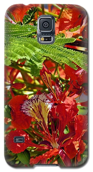 Galaxy S5 Case featuring the photograph Flamboyan by Lilliana Mendez