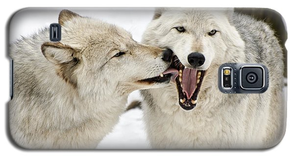 Galaxy S5 Case featuring the photograph Flirting Wolves by Gary Slawsky