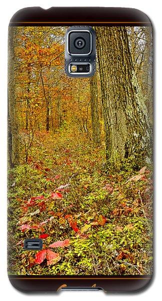 Galaxy S5 Case featuring the photograph Forest Interior Autumn Pocono Mountains Pennsylvania by A Gurmankin