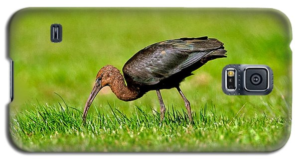 Glossy Ibis Galaxy S5 Case by Paul Scoullar