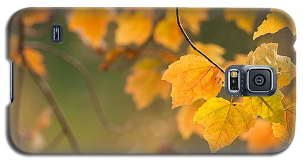 Golden Fall Leaves Galaxy S5 Case