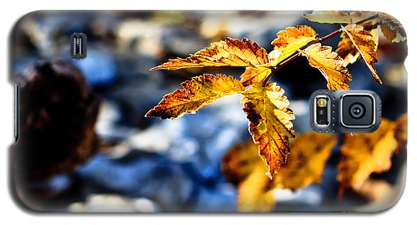 Galaxy S5 Case featuring the photograph Golden Leaves by Lawrence Burry