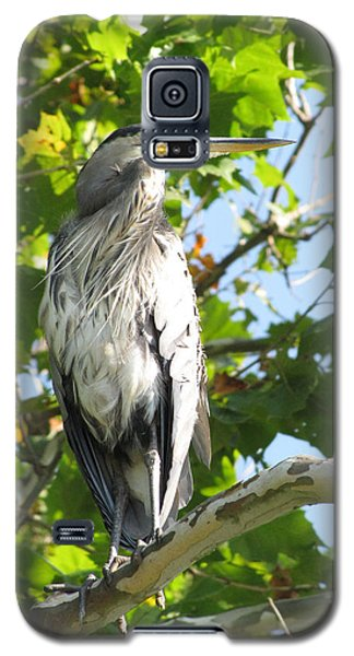 Galaxy S5 Case featuring the photograph Great Blue Heron by Anita Oakley