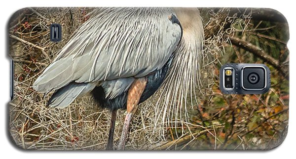Great Blue Heron Galaxy S5 Case by Jane Luxton