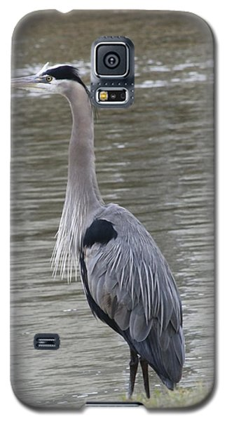 Galaxy S5 Case featuring the photograph Great Blue Heron by Jeanne Kay Juhos