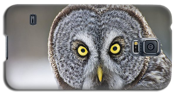 Great Gray Owl Portrait Galaxy S5 Case