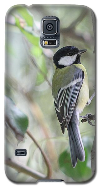 Galaxy S5 Case featuring the photograph Great Tit - Parus Major by Jivko Nakev