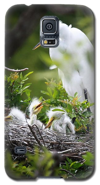 Great White Egret With Chicks Galaxy S5 Case