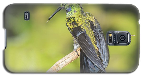 Galaxy S5 Case featuring the photograph Green-crowned Brilliant Hummingbird by Dan Suzio