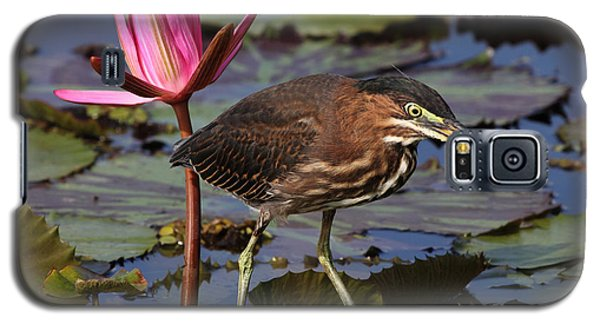 Green Heron Photo Galaxy S5 Case