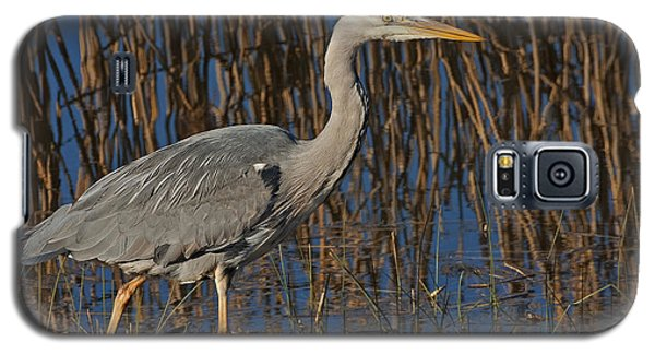 Galaxy S5 Case featuring the photograph Grey Heron by Paul Scoullar